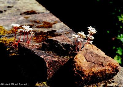 Nature morte - Muret en pierre